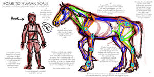 Horse to Human Scale