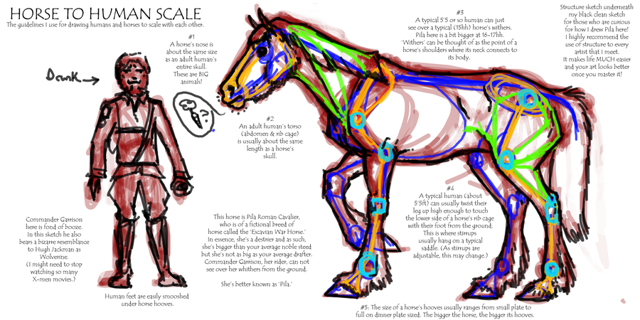 Horse to Human Scale by Falcolf on DeviantArt