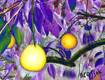 Bright Citrusness