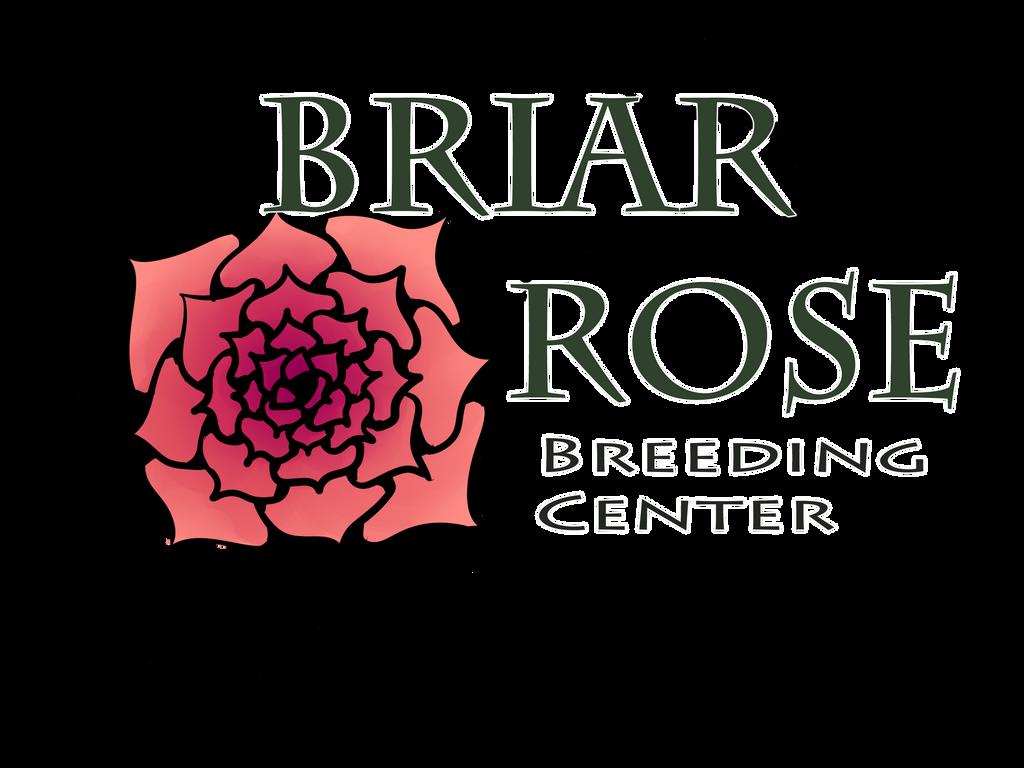 Briar Rose Icon by Nika-tan