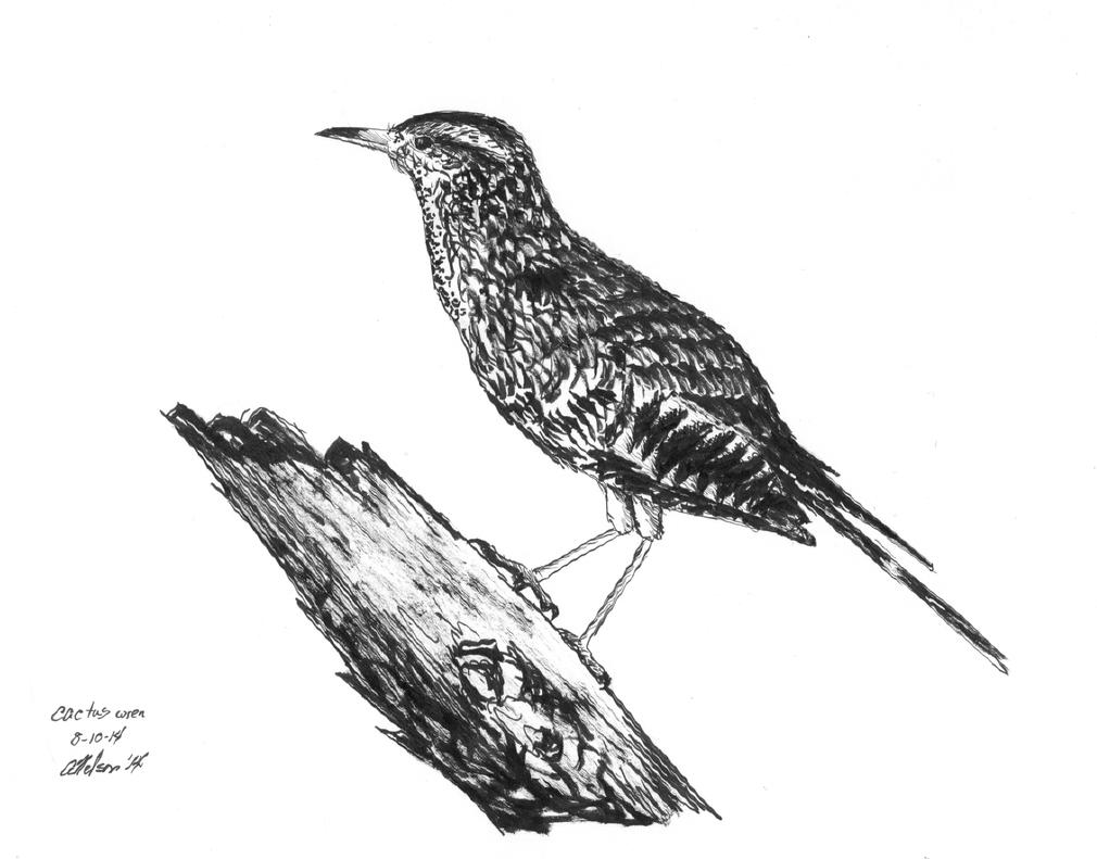 Cactus Wren by MacAnthony30