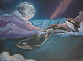 Orcas in the Sky
