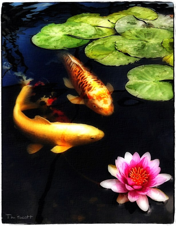 Koi with Water lily No.777 by DigiPainteR