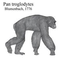 The Common Chimpanzee by Paleonerd01