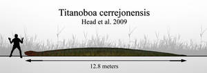The Giant Snake: Titanoboa cerrejonensis
