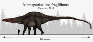 Mystery Solved: Maraapunisaurus fragillimus