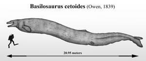 The King Lizard: Basilosaurus cetoides