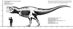 RSM P2523.8 (Scotty) skeletal reconstruction
