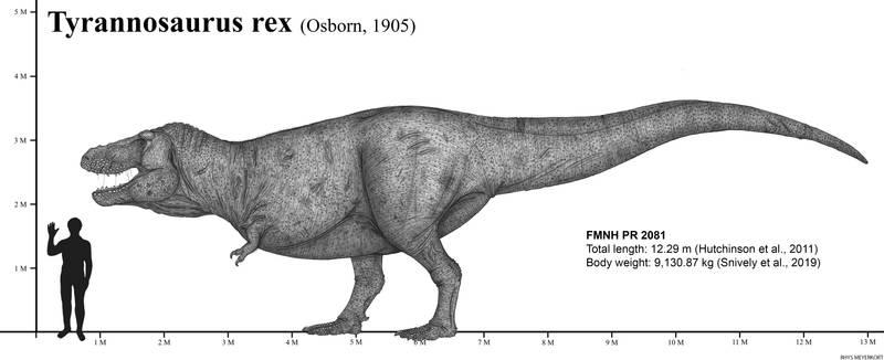Sue the Tyrannosaurus rex (2020)
