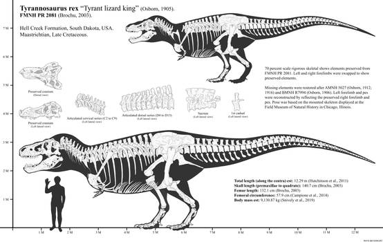 FMNH PR 2081 (Sue) Skeletal Reconstruction