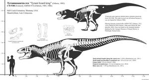 CM 9380 (Holotype) Skeletal Reconstruction