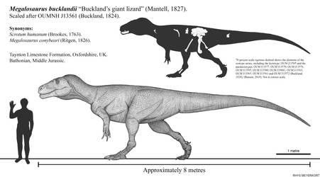 Buckland's Giant Lizard: Megalosaurus bucklandii