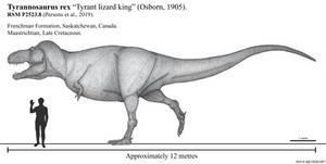 Conservative Scotty the T. rex life restoration