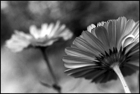Flower 2 by aspera