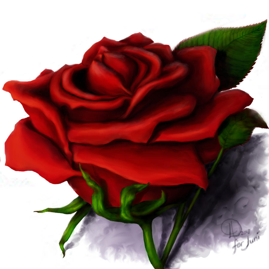Black And Red Rose Drawing