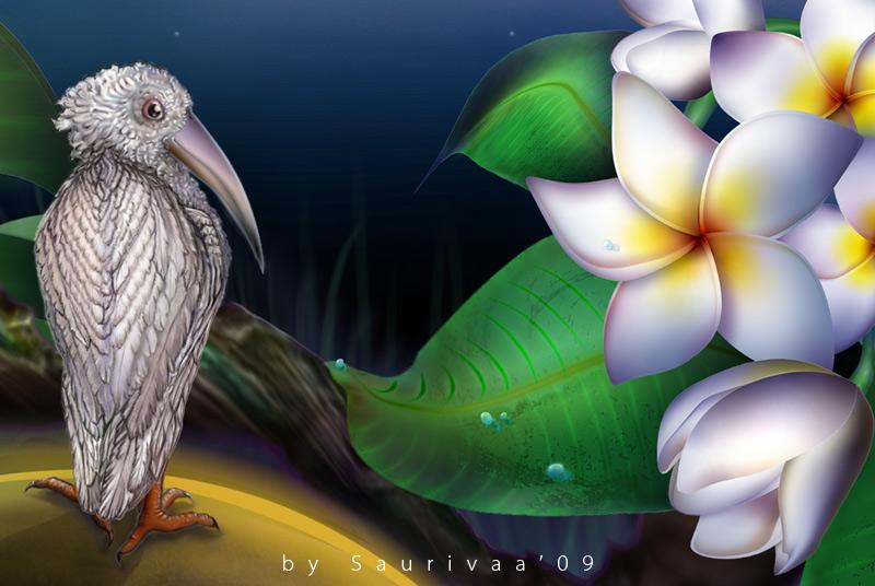 The bird and plumeria alba