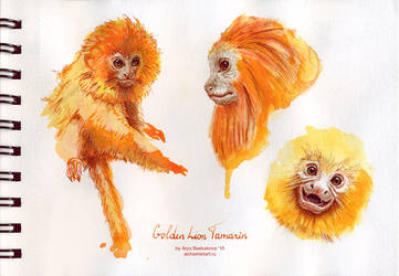 Golden Lion Tamarin by saurivaa