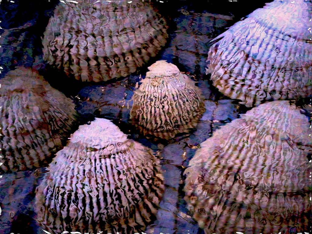 Shells Remembering Water by KittenDiotima