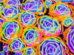 Candyland Amusement Park - Wheels within Wheels by KittenDiotima