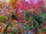 Autumnal Fairyland by KittenDiotima