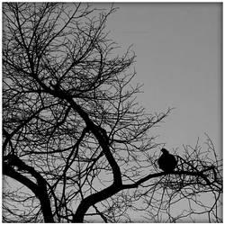 Shapes on the dusky sky by Isyala