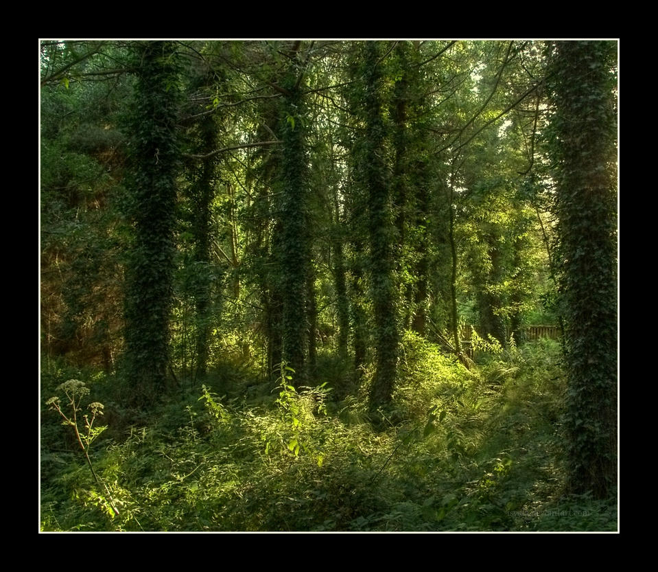 Light in the woods by Isyala