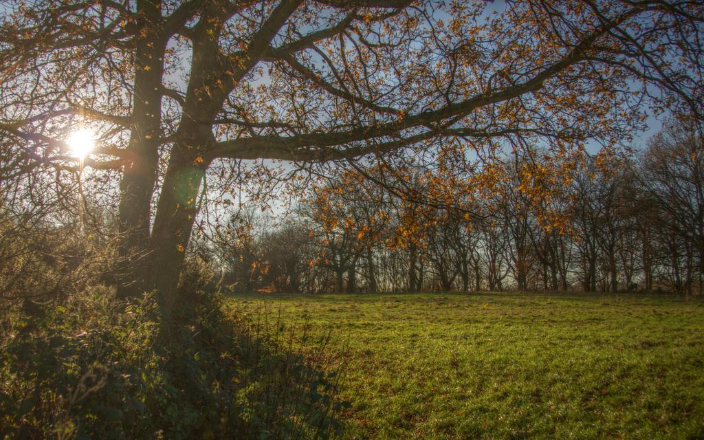 Tales from Hampstead Heath 9 by Isyala