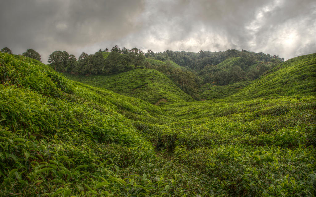 Valley of the Four Winds 2 by Isyala
