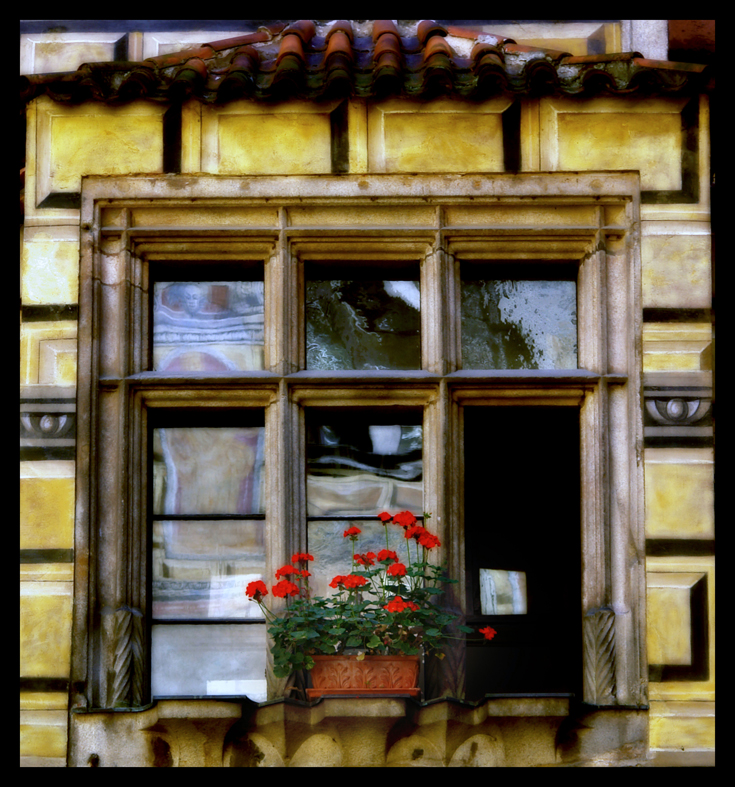 The window by kmasda
