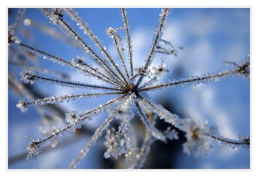 ice.flower