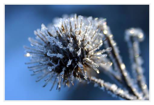 ice.flower.2