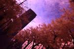 Full-Spectrum Wanderings IV by IRphotogirl