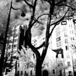 IR Parisian History X -BW Square edit by IRphotogirl