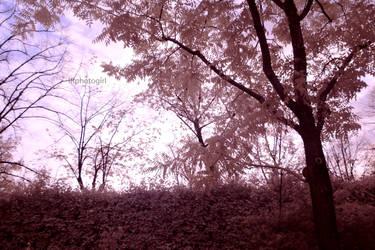Full-Spectrum Wanderings IX by IRphotogirl
