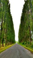 Poplars by JiriBobalik