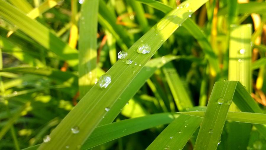 Water drop on grass by JiriBobalik