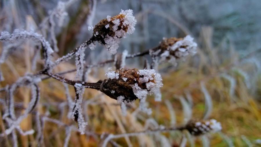 Winter by JiriBobalik