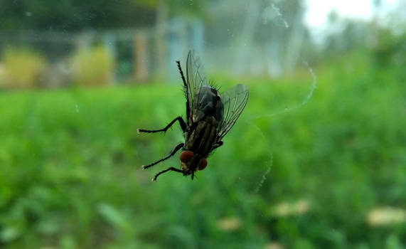Fly by JiriBobalik