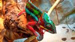 Chameleon by JiriBobalik