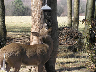 Fed Up Fawn