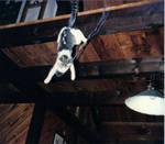 Flying Cat Fun