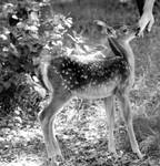 Delight ... fawn