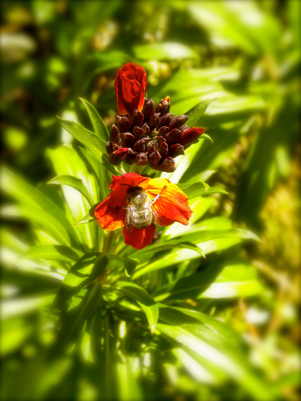 Bumblebee on a red flower by montmartre96