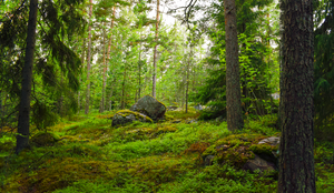 Rock In The Forest by Caisha-photos