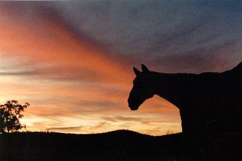 Sunset by Brakawolf