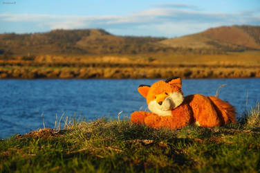 River Coal Fox