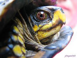 Jace the Turtle