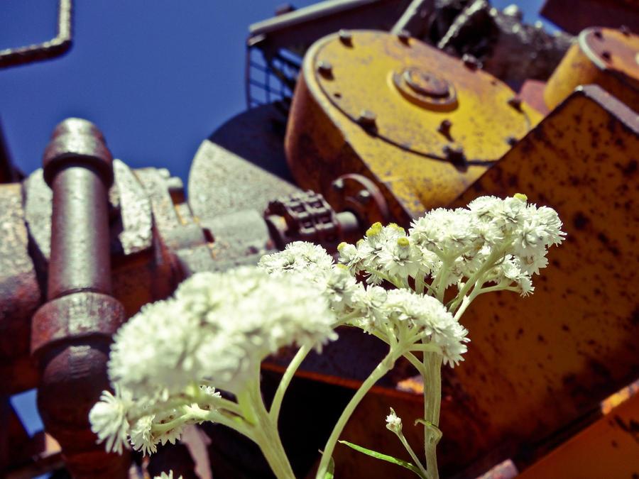 Nature and machine by brandojones