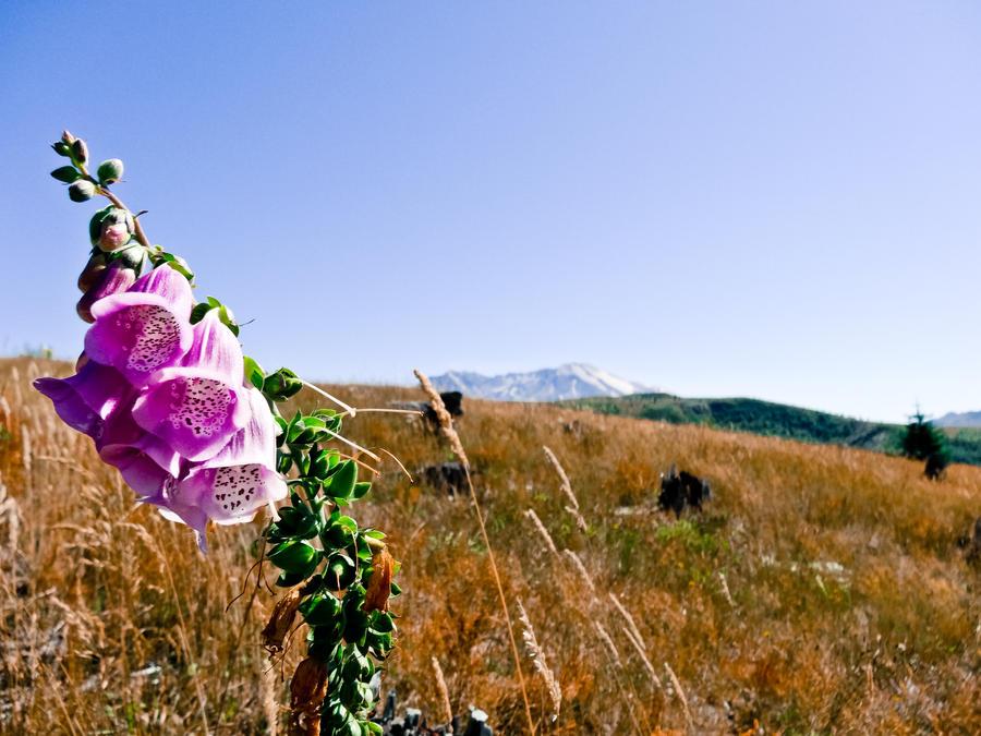 Flower with a view by brandojones