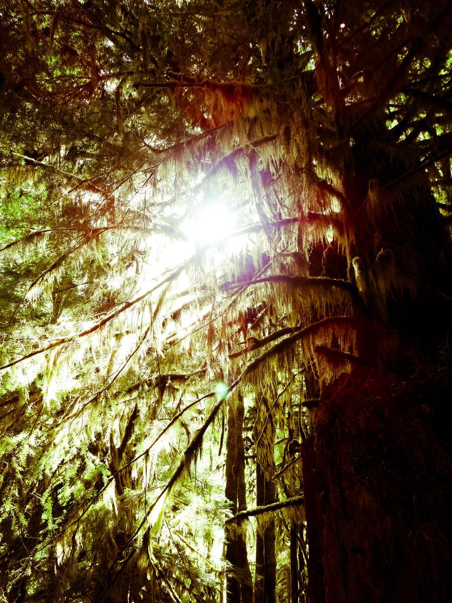 Sunny moss by brandojones